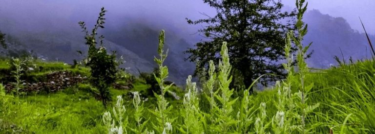Read more about the article Deoria Tal – A Detailed Travel Guide